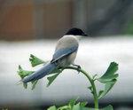 20060702bird