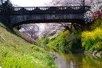 20090406sakura4