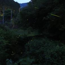 20130525hotaru2m